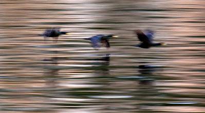 Photo: Vögel (künstlerisch)