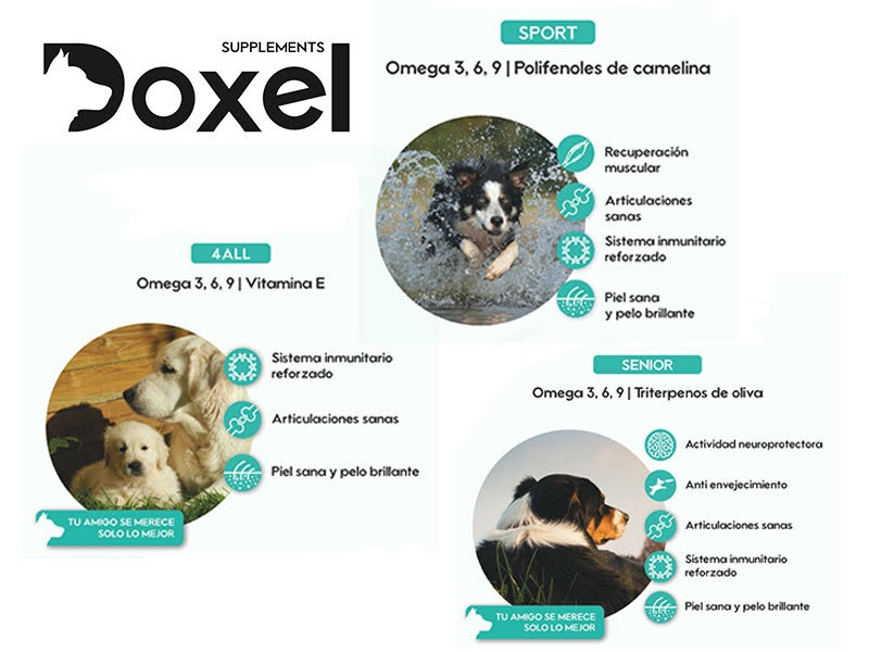 Doxel Supplements Review