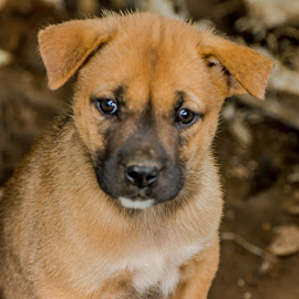 Baby Dog by Kriswanto Ginting's - Animals - Dogs Portraits ( dogs, dog portrait, nikon d7100, nikon d, dog, nikon,  )