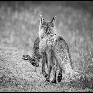 Fox and Rabbit-2.jpg