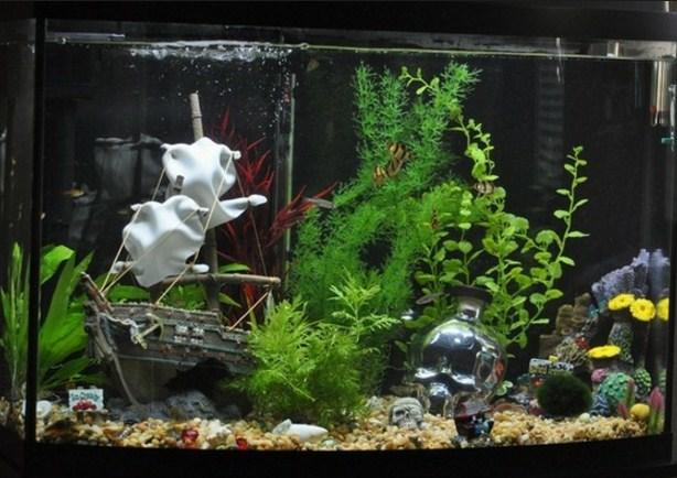 aquarium decoration ideas android apps on google play. Black Bedroom Furniture Sets. Home Design Ideas