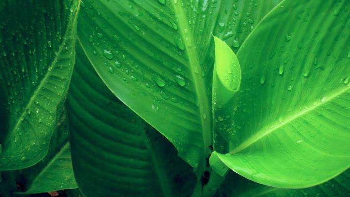 verde di Elisa Legari PHOTO
