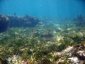 Photo: Often, urban coral reefs are degraded due to human pressure