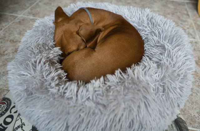 Chó có thể ngủ nửa ngày