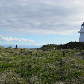Land meets Sea by Kim Pauly - Novices Only Landscapes ( #landscape, #beauty, #nature, #ocean, #newzealand, #countryside, #love, #lighthouse. #sea,  )