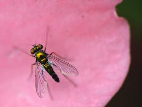 Photo: Fly on petal