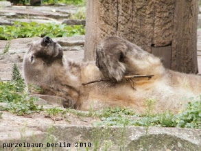 Photo: Knut und seine Stoeckchenshow :-)
