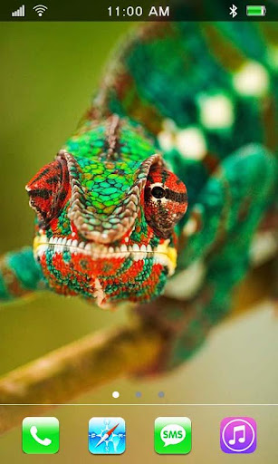 Lizards HD live wallpaper