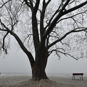 Nature and Dog at Rest by Randi Grace Nilsberg - Landscapes Beaches ( peaceful, bench, silhouette, frost, atmosphere, ocean, beach, relaxing, landscape, coast, hoarfrost, foggy, winter, simplicity, tree, fog, relaxed, serene, serenity, snow, peace, day, dog, doberman, misty, mist,  )