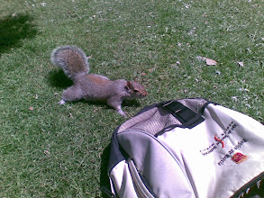 Photo: Rodolfa want to smell my bag. Lunching in Alexandra Park, Hastings, UK.