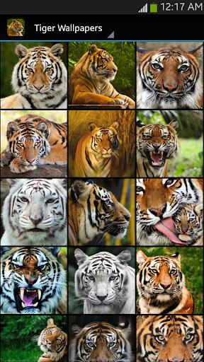 Tiger Wallpaper  screenshots 1