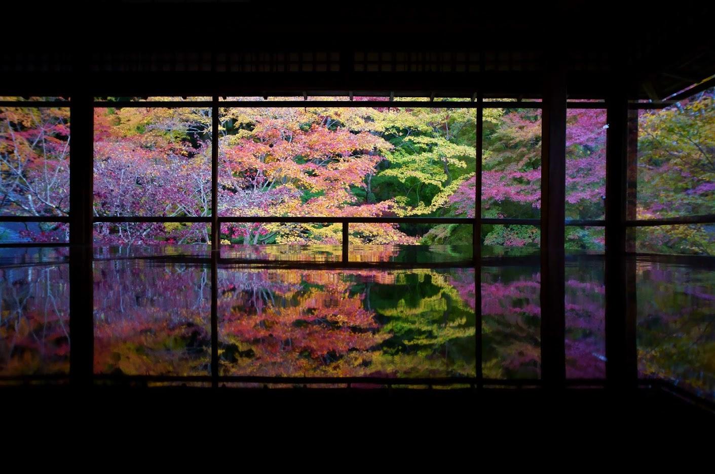 Lý do cho những chiếc lá mùa thu kỳ diệu ở Nhật Bản 2