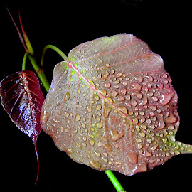 Leaf  by Asif Bora - Nature Up Close Leaves & Grasses