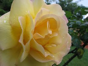 Photo: ... kehre ich doch in den schönen Garten der Anlage zurück ...