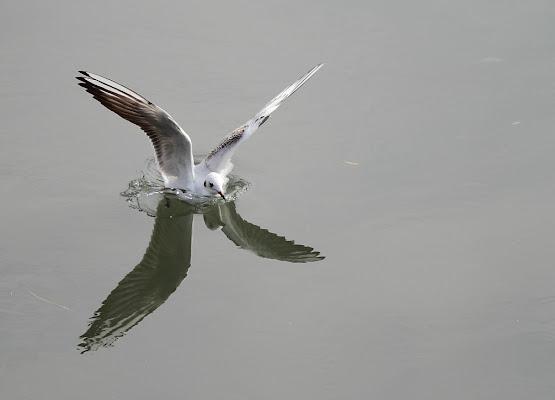 X- fly di wilson6.1