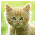Cats Memory Game Free icon