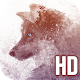 Wolf HD Wallpapers for Free Download for PC Windows 10/8/7