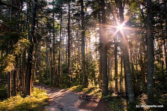 Photo: Sun streaming through the trees at Mt Ascutney State Park by Tara Schatz