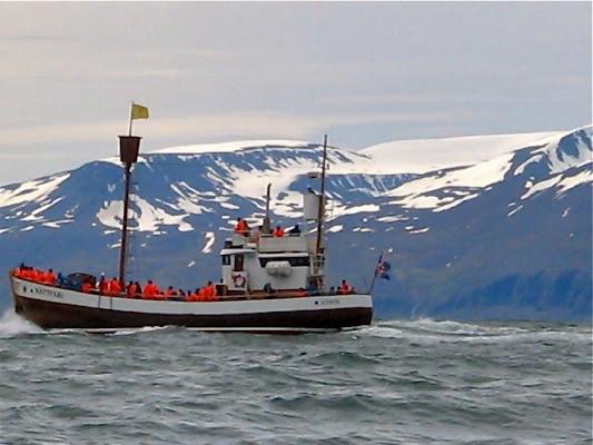 A caccia fotografica di balene di vittorio
