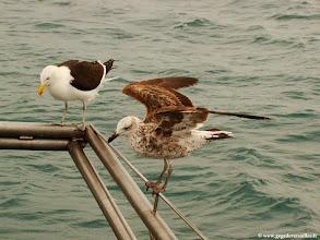 Photo: #003-Nous sommes accueillis à notre arrivé à Shark Alley par de nombreux oiseaux.
