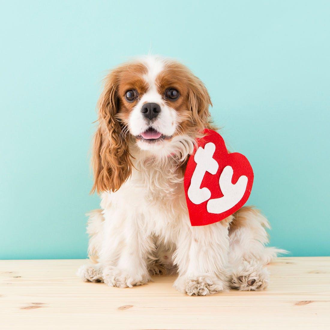"""Dog wearing """"Ty"""" heart collar"""