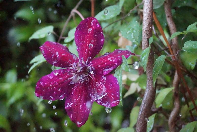 Pioggia nel giardino  di patsie_1506