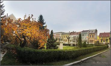 Photo: Gutui (Cydonia oblonga) din Piata 1 Decembrie 1918 - 2017.12.07