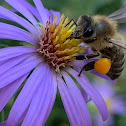 Bee the Pollinator