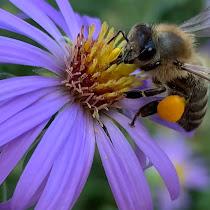 Pollinator Detectives