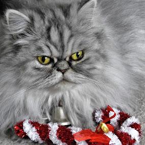 by Rhonda Rossi - Animals - Cats Portraits (  )