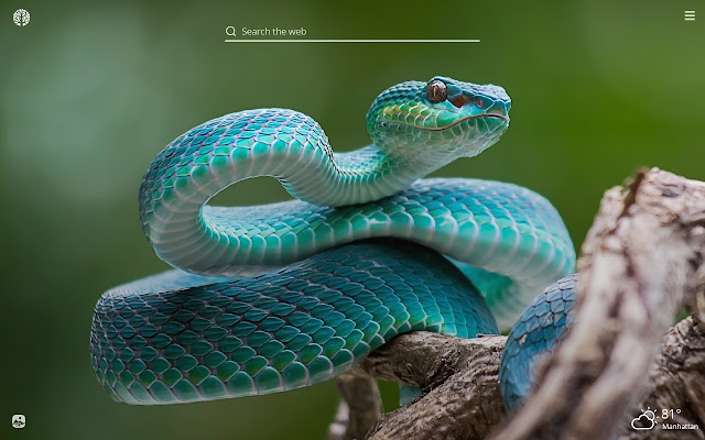 Snakes HD Wallpapers New Tab Theme