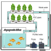 Aquaponics Ideas
