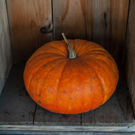 Pumpkin In Crate by Tanya Greene - Public Holidays Halloween ( harvest, halloween, fall, thanksgiving, autumn, crate, pumpkin )
