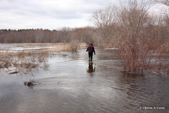 Photo: Anne wading out, 3.13.11