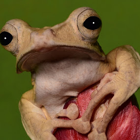by Terry DeMay - Animals Amphibians (  )