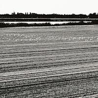 Il delta del Po di