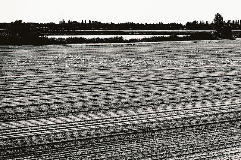 Il delta del Po di Ro51