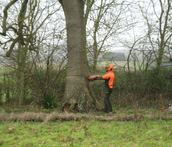 tree felling in process in worcestershire