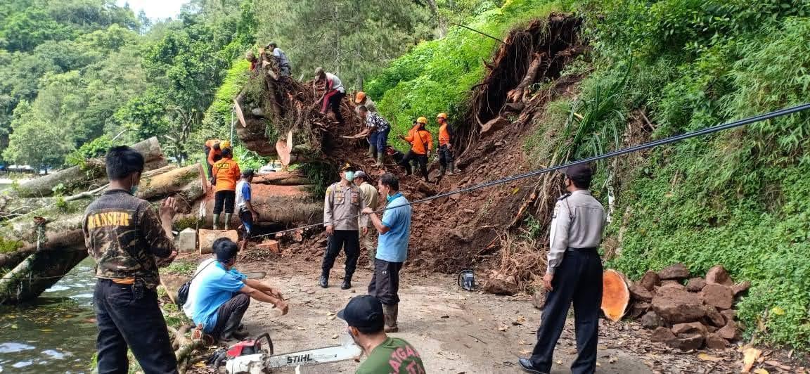 Akibat Hujan Deras : Pohon Tumbang Di Kawasan Telaga Ngebel