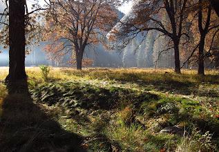 Photo: Sunrise - meadow #2771