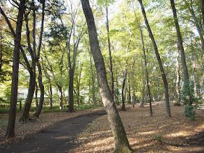 Photo: きれいに掃清められた雑木林。さまざまな用途で利用され、市民の憩いの場になっている。