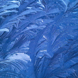Iced Car by Ingrid Anderson-Riley - Abstract Patterns