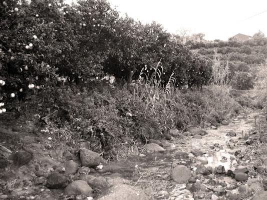 La Sicilia e gli agrumeti di irina86
