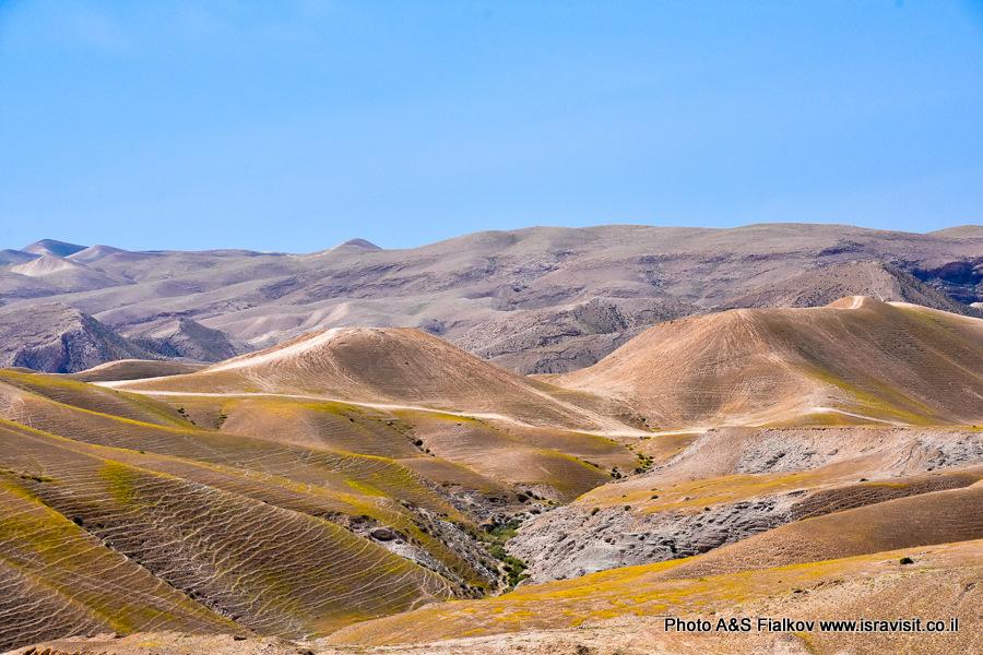 Иудейская пустыня. На экскурсии.