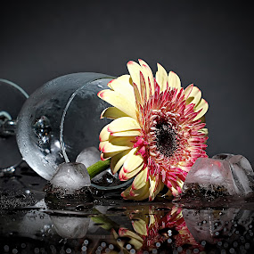 by WanUkay Perdana - Nature Up Close Flowers - 2011-2013