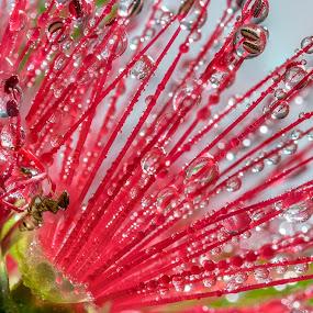 Flower ant by Adriaan Vlok - Flowers Single Flower ( flower ant, ant, flower, droplets )