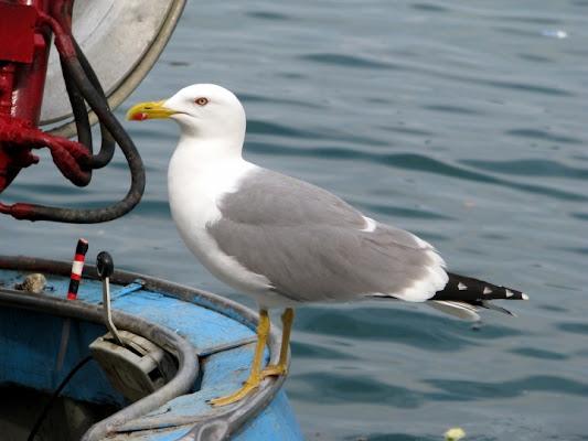Il capitano a bordo di pier50