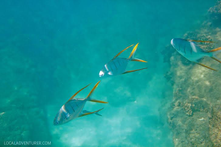 Free Diving of Santa Maria Beach Cabo.