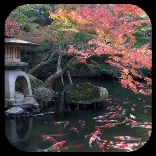 錦鯉池視頻動態壁紙 個人化 App LOGO-硬是要APP