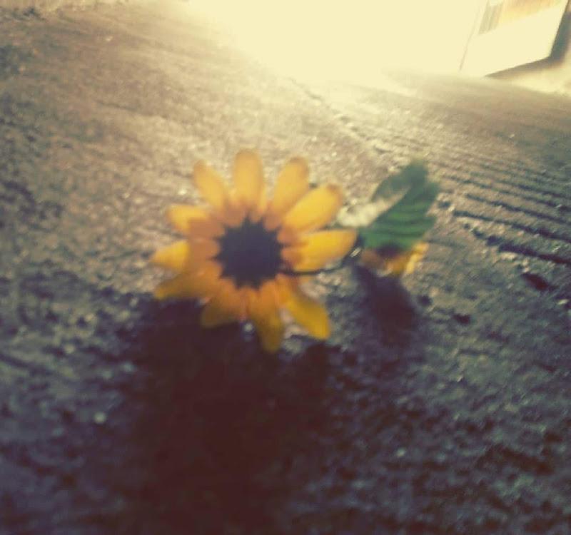 Hope di Monica Galli